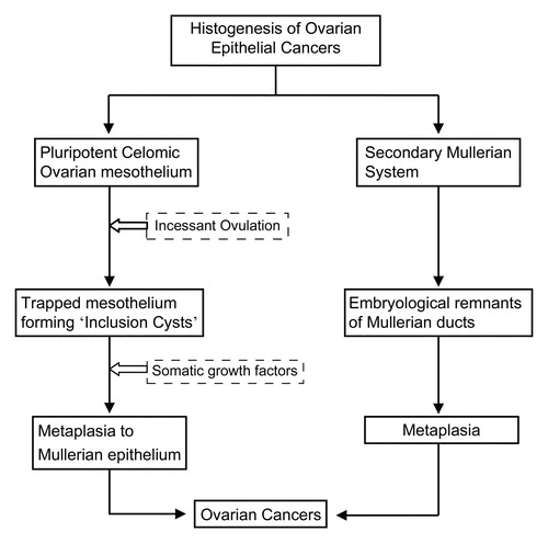Histologic Molecular And Cytogenetic Features Of Ovarian Cancers Implications For Diagnosis And Treatment Radiographics